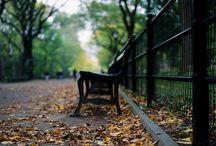 Autumn in the Big Apple / by Dalton Massa