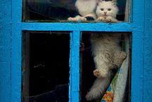 Cats lol / by Tiffany Joy