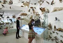 MUSEUM.BL / by dan jakob