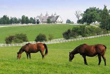 My old Kentucky home / by Kathy Cunningham