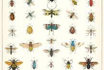 If Insects Were To Vanish... / by Ramona Trejo
