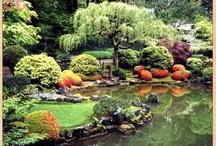 My Dream Garden / by Destiny Arnold