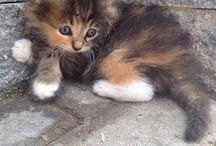 Kittens :) / by Kaitlyn Stangeland