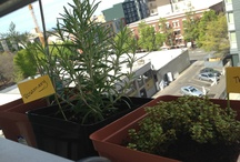 The Little Balcony Garden That Could / by Jessica Bowe