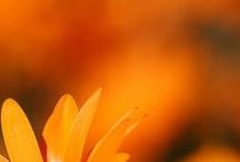 Love Orange / by Roxanna Cortez