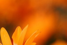 orange / by Jessica Grosslein
