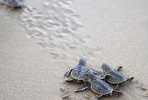 Turtles! / by Catheryn Johnson