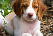 dog / by izabela peebles