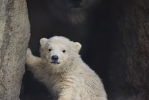 Animal Kingdom / by Bibis Giacomet