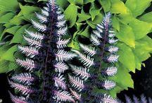 Gardens - Ferns / by Monica Williams