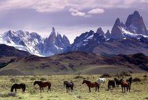 Horses-Wild / by Mary Snarr