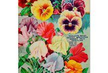 Vintage Garden / by Cindi Whittaker