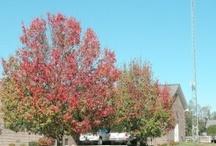 Trees (farmcarolina.com) / by farm carolina