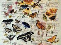 All About Bubbaflys / by Sarah Foltz