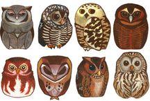 owls / by Kristin Zoellner
