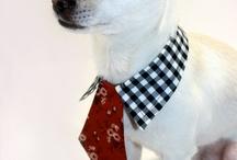 dog items / by deborah faulkner