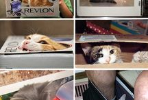 Naughty (but so cute!) Kitties / Reminders of why I love cats so much. / by Sarah Overvaag