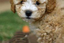 Puppy's I Want! / by Kyra Klumpyan