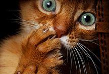 CATS / by Pamela Mccrocklin