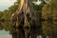 Wetlands, Swamps & Marshes / by Jacqueline Brooks