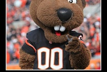 It's Benny! / Fun pictures of Benny the Beaver! / by Oregon State University Facilities Services