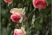 Flowers / by Alcibiades Cortese