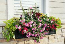 outside decor/plants / by Lauren Roberts Brown