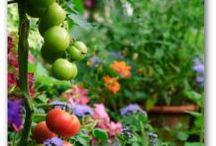 Gardening / by Tina Larson Tanuis