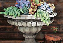 Succulent Gardens / by Brenda Lindley
