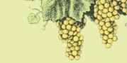 Wine / by West Inn & Suites