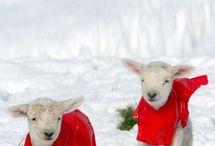 sheep / by Linda Hamner