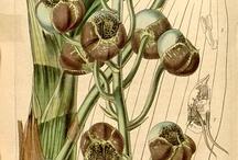 Illustration scientifique / by Société Française d'Illustration Botanique