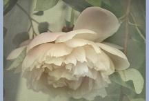 Lovely Flowers / by Ikuyo Imai