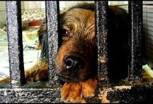 Petitions to Sign / by Animal Parent