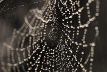 Spider Webs / by CJ Holmes