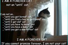 Beautiful Cats Great & Small! / by sherlocked221B