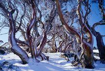 Australia / by Kylie N