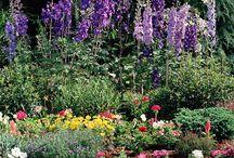 Gardening - Flowers / by Laurel Johnson