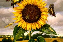 sunflowers / my favorite flower...the color, the height, the way they look to the sun, lots of varieties, and lots of different presentations here of artistic sunflowers, / by Kim Teigen