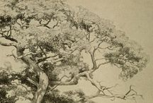 Reference - trees and plants / by Ian W