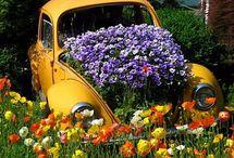 Garden / by Cheryl Costin