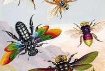 Bees and other insects (and arachnids) / by Amy Shannon