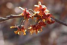 Shrubs / Beautiful shrubs for gardens of all sizes, plus related tips. / by Horticulture Magazine