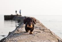 Pups / by Omar Sayeed