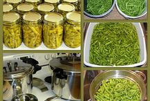 Canning,Freezing & Homesteading / by Surina Brewer