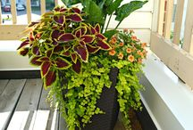 Container gardening ideas / by Emily Spicer