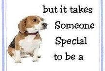 Beagles / by Nicole Warren, Director of National Sales and Opportunity with For Tails Only