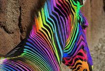 Rainbow Wheel / by Katie Carder