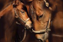 Horses / by Debbie Beals