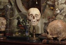 Halloween ideas / by Cheri Bugni-Clausen